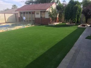 Photo of beautiful green grass